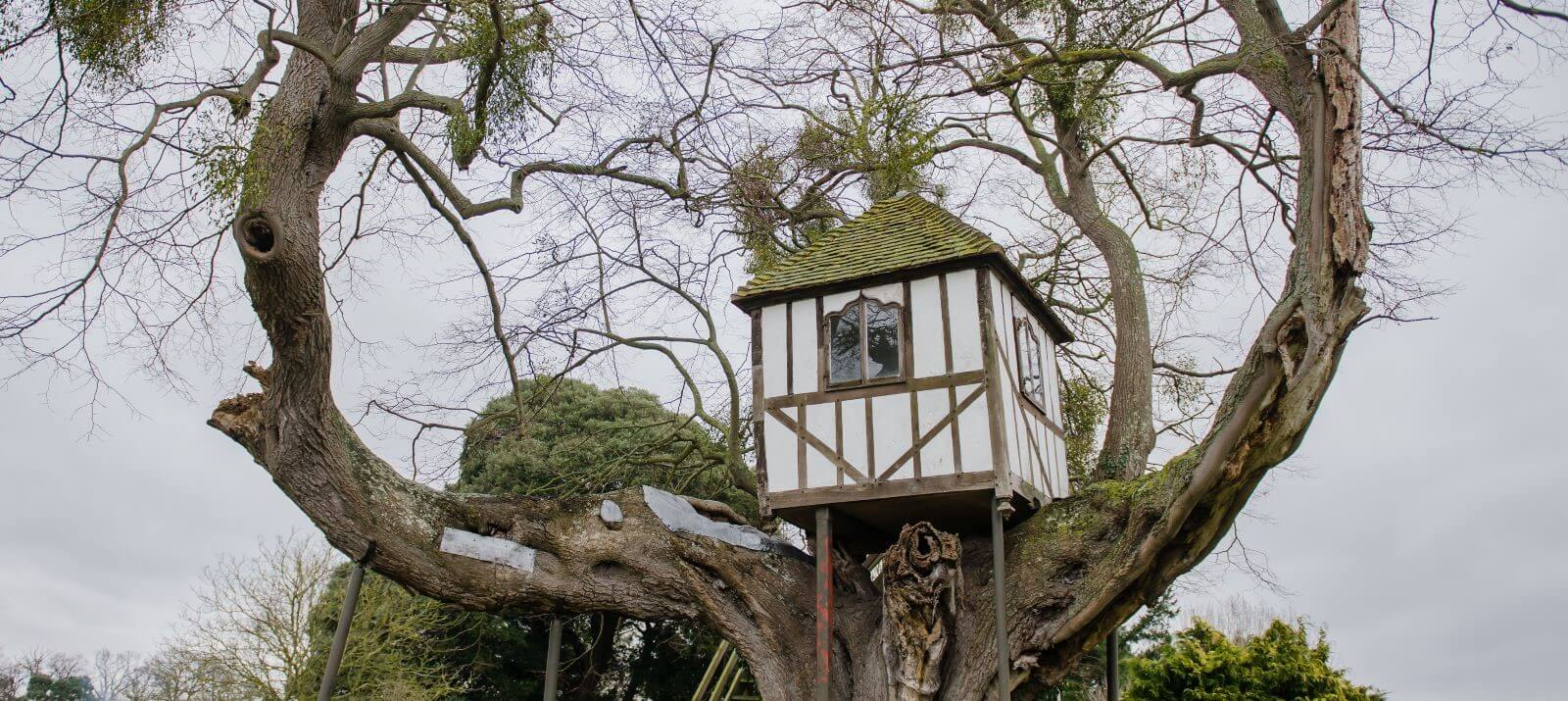 World 39 S Oldest Treehouse